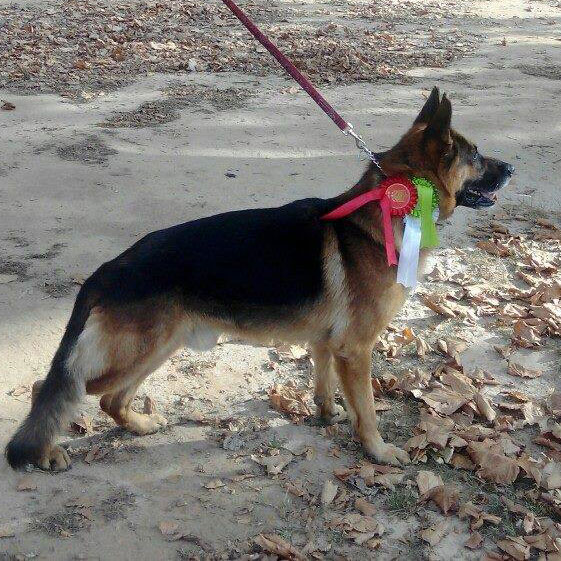 Exposición Canina Internacional de Muskiz