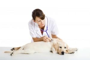 perro-clinica-veneno