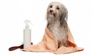 remedios-naturales-pulgas-animales-480x287